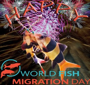 Happy World Fish Migration Day! © Fishlady