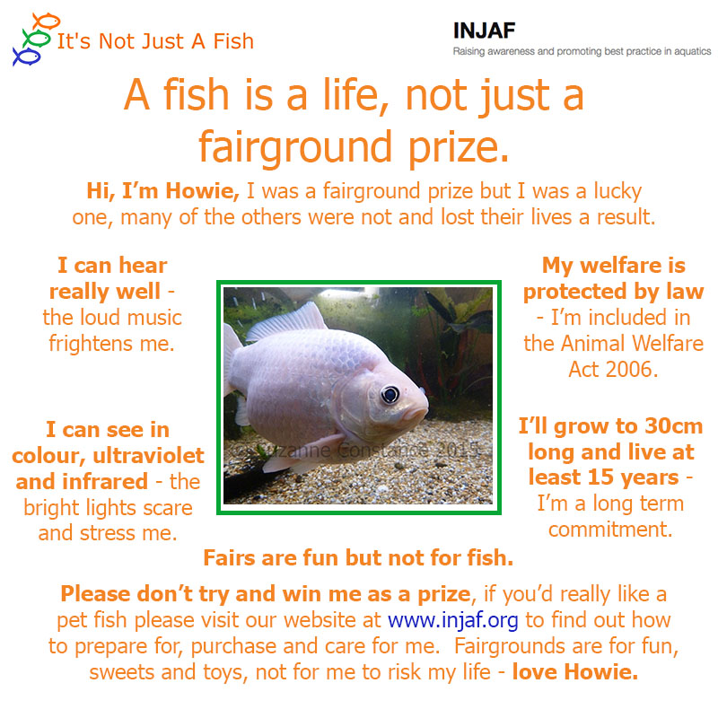 A fish is a life, not just a fairground prize - INJAF