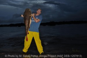 A red tailed catfish in its natural environment in Brazil © Photo by M. Sabaj Pérez, iXingu Project (NSF DEB-1257813)