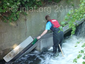 Eel trap checking at Middle Mill