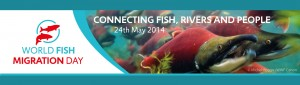 World Fish Migration Day - 24th May 2014