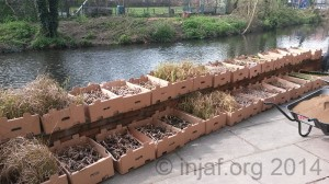 1000 native UK plants waiting to go in ...