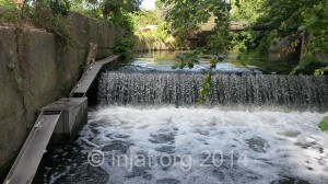 4th July - no eels but here's a pic of the weir which shows how impossible it would be for any eels to get past it without the aid of the trap