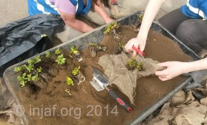 Plant bagging