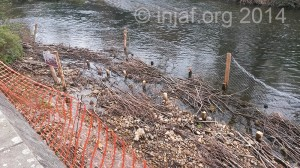 Fences were put up to protect the riverbank while it settles in