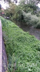 Hogsmill habitat improvement project: August 2014