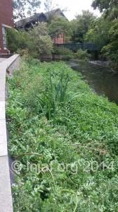 Upstream view - August 2014