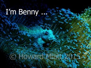 I'm not just a fish - I'm Benny