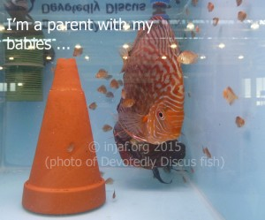 I'm not just a fish - I'm a parent with my babies