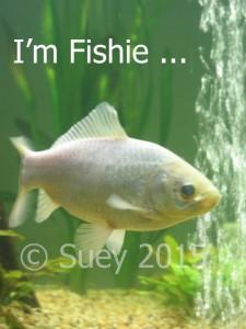 I'm not just a fish - I'm Fishie