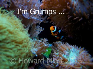 I'm not just a fish - I'm Grumps
