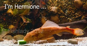 I'm not just a fish - I'm Hermione