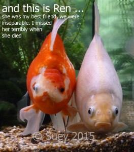 I'm not just a fish - I'm a friend