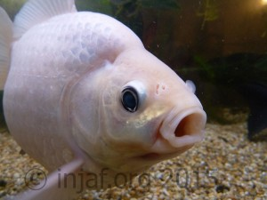 Fish Tales - straight from the fishes' mouth