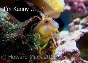 I'm not just a fish - I'm Kenny