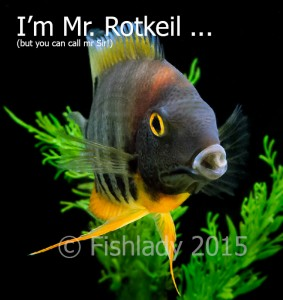 I'm not just a fish - I'm Mr. Rotkeil