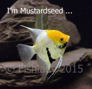 I'm not just a fish - I'm Mustardseed