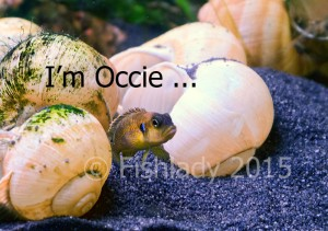 I'm not just a fish - I'm Occie