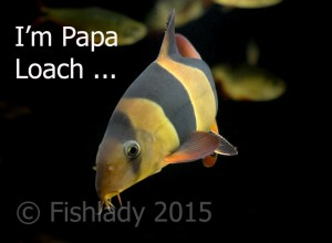 I'm not just a fish - I'm Papa Loach