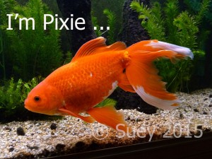 I'm not just a fish - I'm Pixie