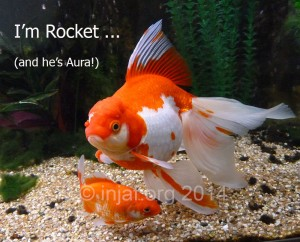 I'm not just a fish - I'm Rocket (and he's Aura!)