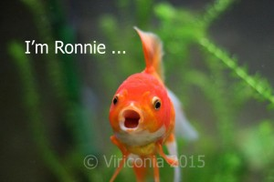 I'm not just a fish - I'm Ronnie
