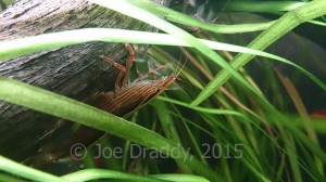 Bamboo shrimp are fascinating and would be great for a child's tank