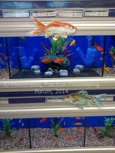 Pets at Home showing what size tanks goldfish need