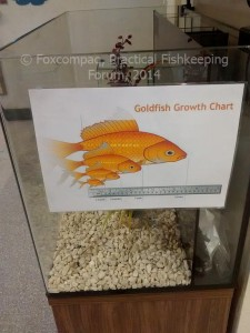 What size tank for goldfish