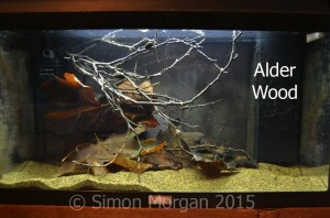Alder wood is aquarium safe and attractive