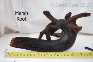 Marsh root has a dark colour and can look very striking in your aquarium
