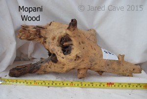 Mopani wood has a two tone colouration and looks attractive in the aquarium