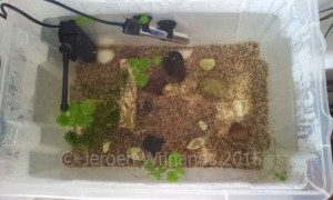 A quarantine tank on a budget - quick and easy to set up