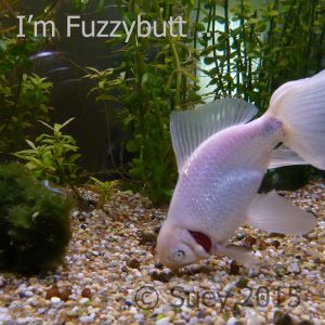 I'm not just a fish, I'm Fuzzybutt